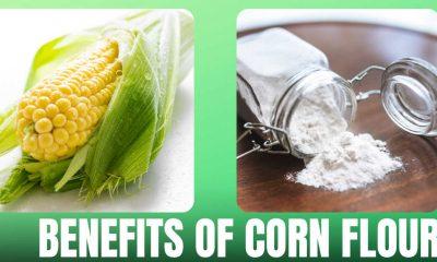 Corn Flour in Hindi
